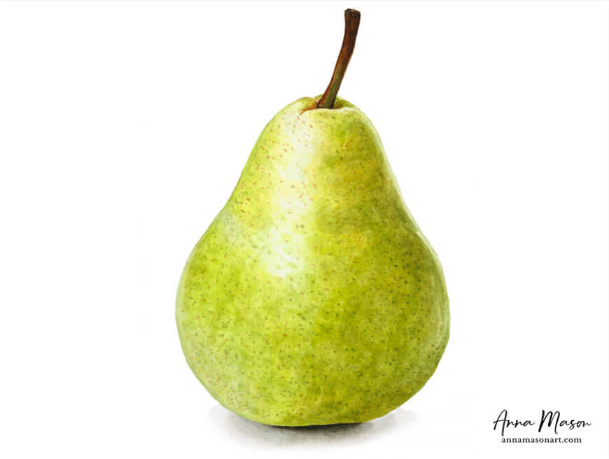 williams pear watercolour